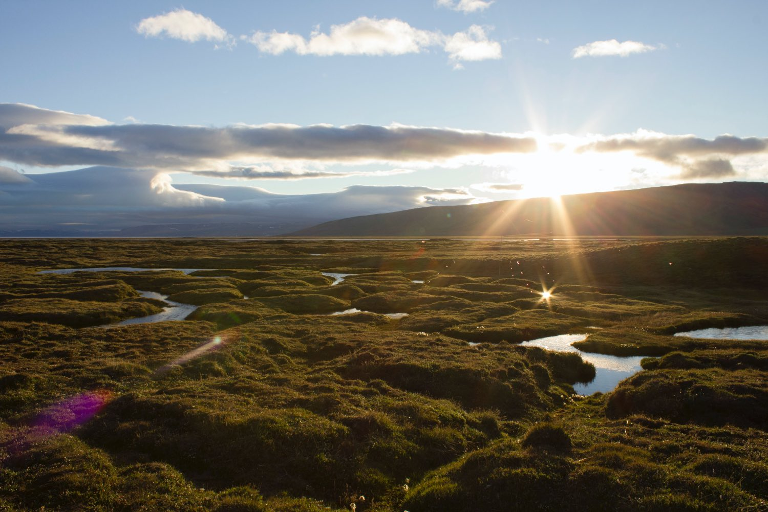 summer landscape of bylot island - sun, grass and meandering creeks