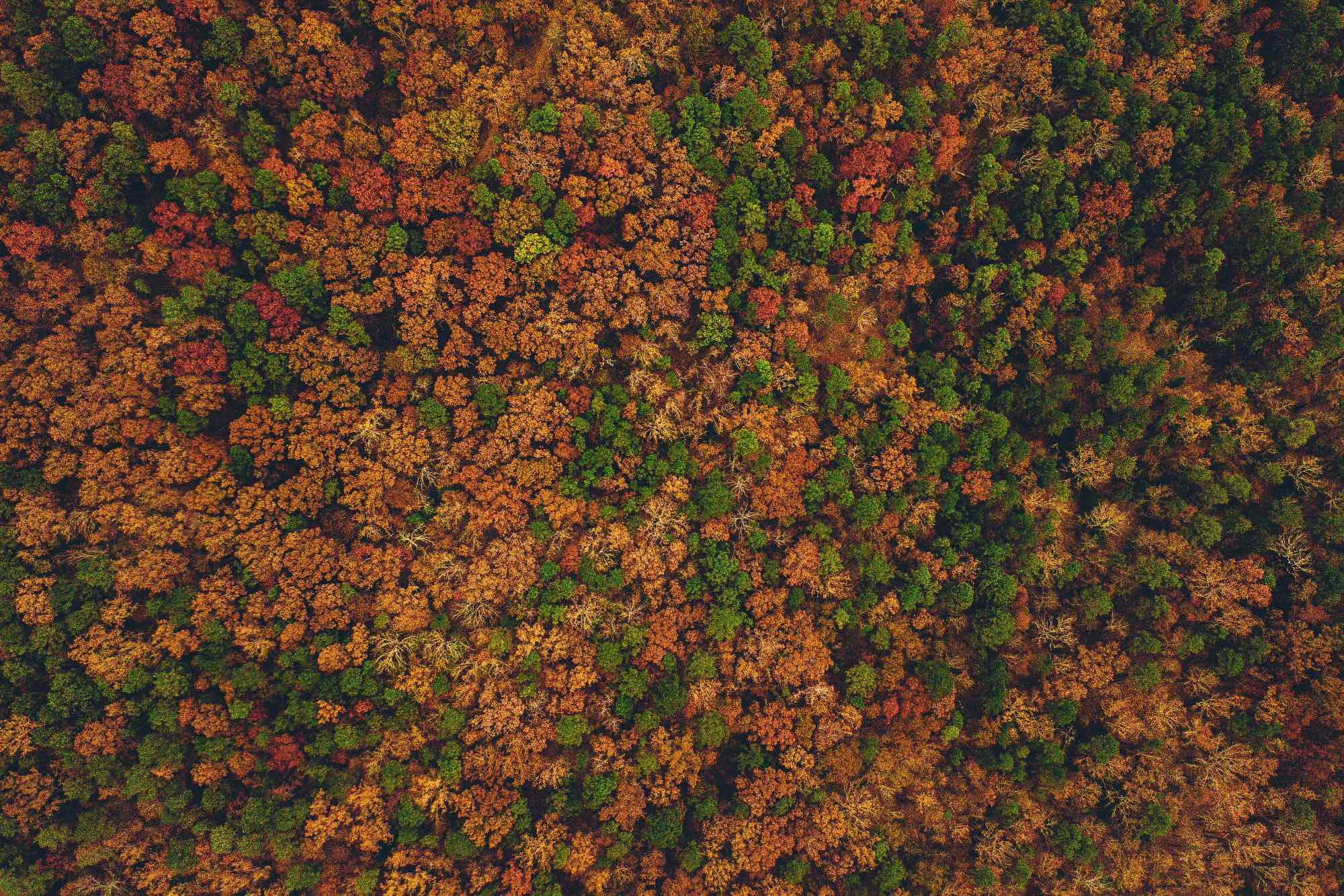 forest in autumn colors taken by drone
