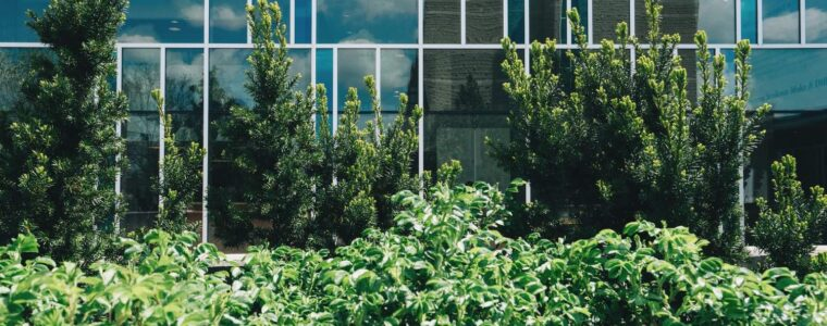 trees and shrubs in front of glass buildings