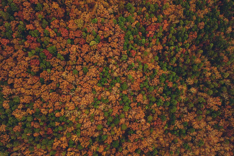 foret d'automne prise de haut - drone