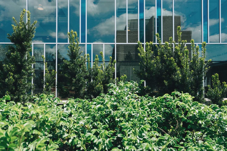 arbres devant édifices vitrés
