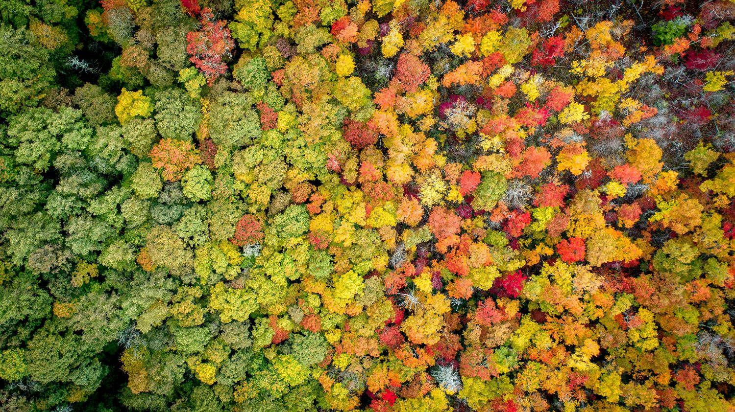 colorful forest from above